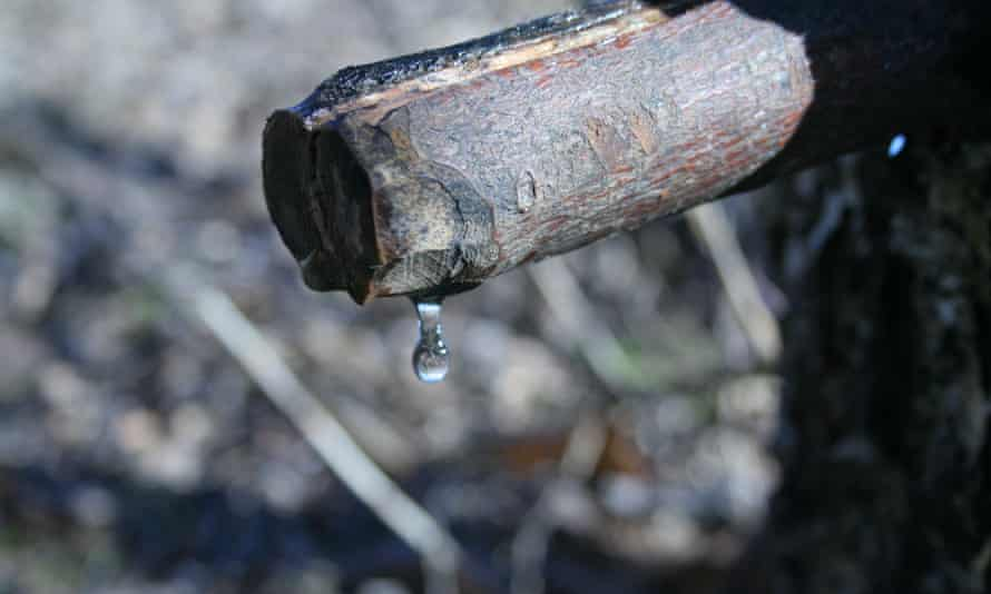 Drop of birch water