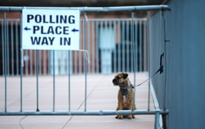 A border terrier waits outside a polling station in Glasgow, Scotland