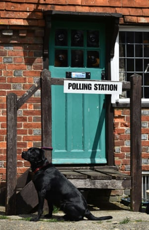 A Labrador waits outside polling station in Chiddingstone Hoath, Kent