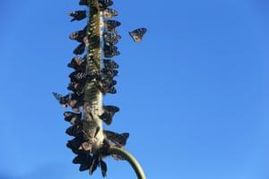 Butterflies on Hamilton Island. Queensland, Australia. Sunday, 3rd May 2015