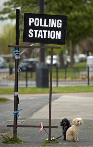 Poodles paws for thought as their owner casts a vote in Hull