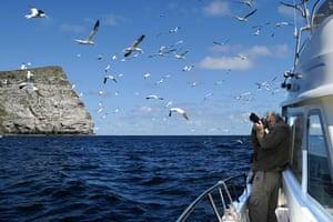 David Tipling photographing gannets off Shetland