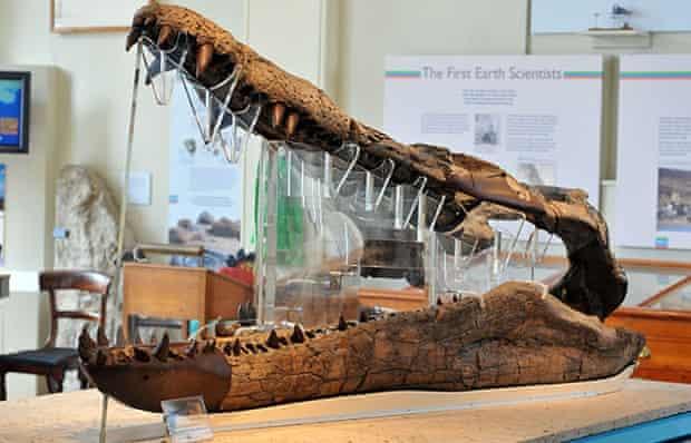 Pliosaur jaws at the Dorset County Museum.