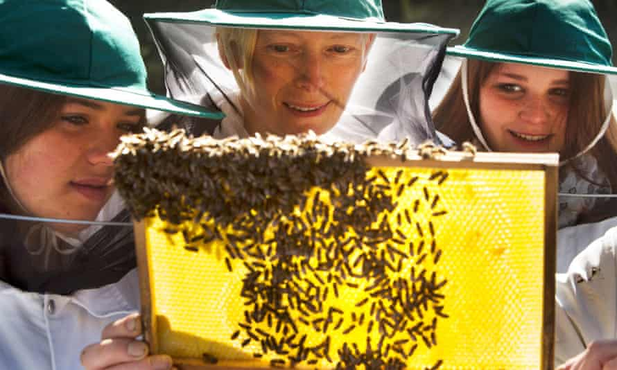 Golden time: Tilda Swinton and students collect honey from Andrew Abrahams's bee hives