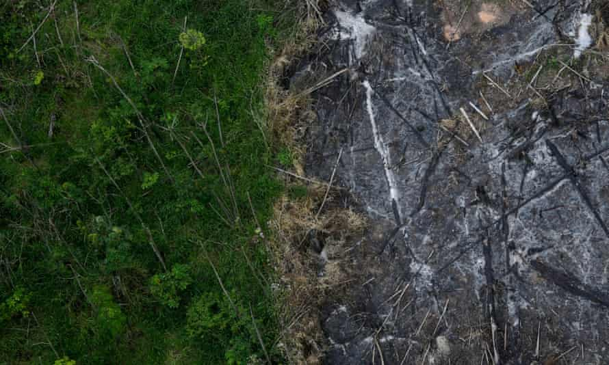 An area of the Amazon rainforest which has been slashed and burned stands next to a section of virgin forest.