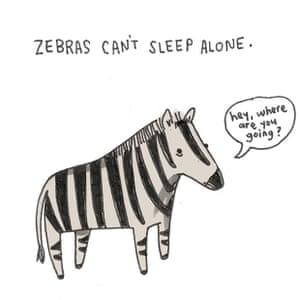 Brooke zebra