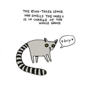 brooke ring tailed lemur