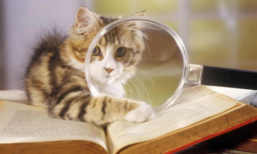 Cat reading with a magnifying glass