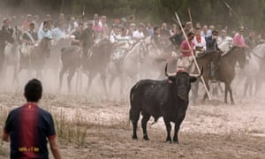 In Tordesillas, Valladolid, Castile and León, a tournament is held September in which hundreds of lancers and riders chase a bull around a closed field until the animal is stabbed to death.