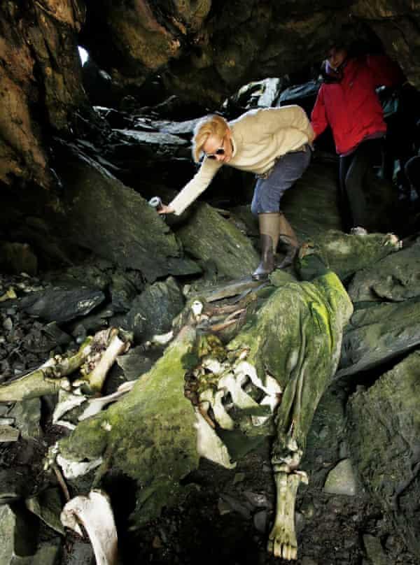 Tilda leads pupils through a coastal cave past a mummified cow