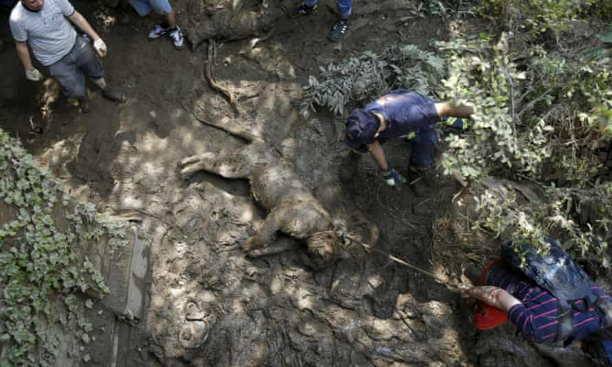 Rescue workers drag a dead tiger at the zoo in Tbilisi on Monday.