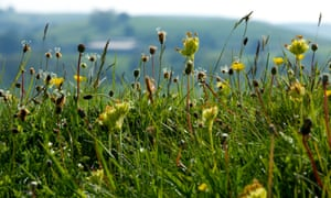 Since 1945 97% of the UK's wildflower meadows, such as this one at Priestcliffe Lees, Derbyshire, have disappeared.