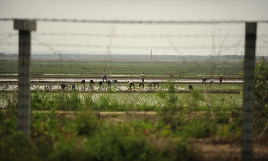 North Koreans work in a field behind a barbed wire fence which separates China and North Korea on the outskirts of Dandong.