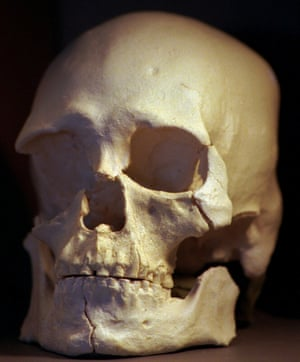 A plastic copy of the skull of 9,000-year-old Kennewick Man. New DNA analysis of the skeleton has shown a close match with the Native American Colville tribe.