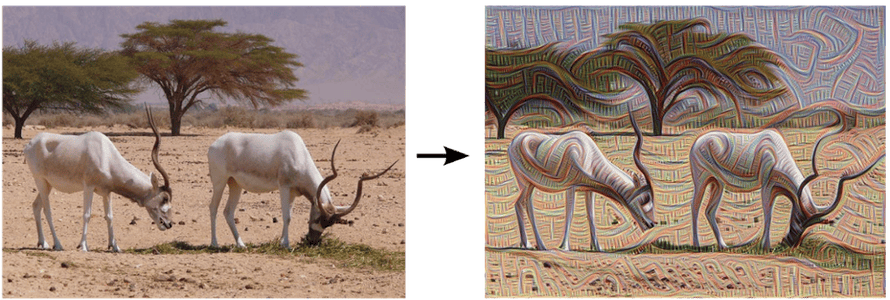 An ibex grazing, pre- and post-edge detection.