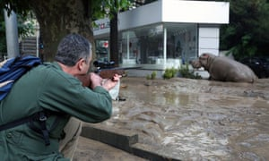 Can the Tbilisi hippo become the symbol of Georgia's flood recovery