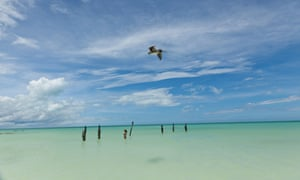 A pelican on Isla Holbox, where wildlife is a major draw for tourists.