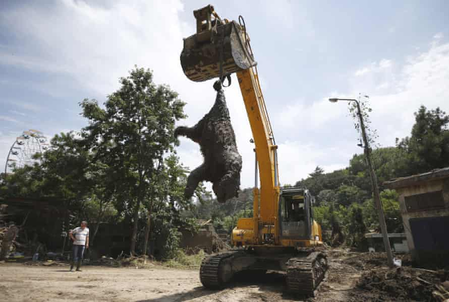 An excavator removes a dead bear at the zoo in Tbilisi, Georgia, as the cleanup continues.