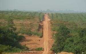 利比里亚西北部Sime Darby特许经营的棕榈树。自2010年底以来,利比里亚最后一片大型原始森林的大部分地区消失,为无视传统和与森林密切相关的当地习俗的棕榈油让路。