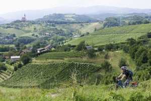 Faire du vélo à travers un vignoble dans la région de Maribor en Slovénie.