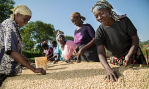Cooperative members sort coffee on drying beds at Orinde Farmers' Cooperative Society, Kenya.