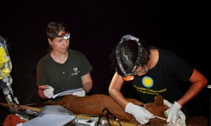 Jenks and Nucharin Songsasen taking body measurements of an anesthetized dhole.