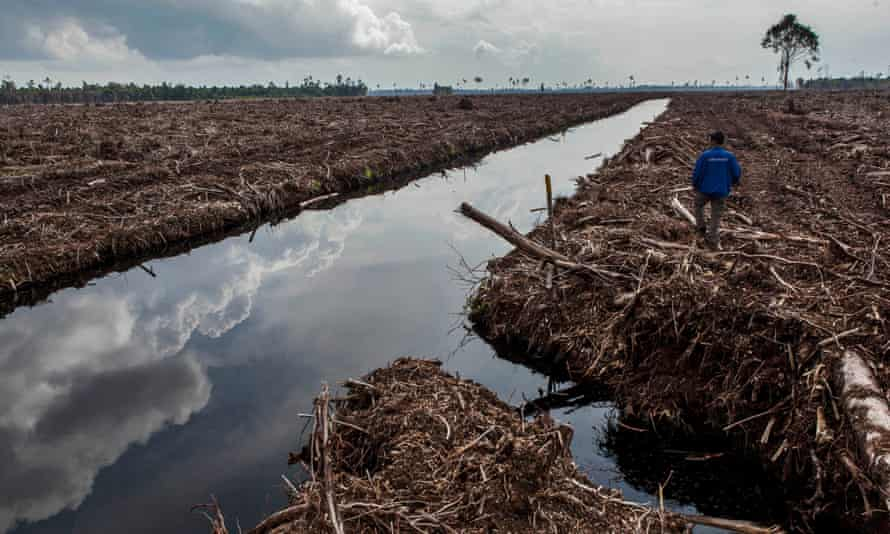 A forest activist inspects land clearing and drainage of peat natural forest located on the concession of PT RAPP (Riau Andalan Pulp and Paper), a subsidiary of APRIL group which is being developed for a pulp and paper plantation in Sumatra, Indonesia.