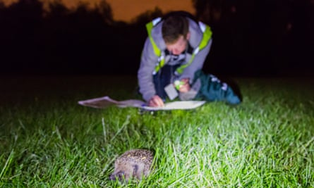Regent Park's hedgehog population was uncovered by surveys carried out in 2014 by the Royal Parks Foundation.