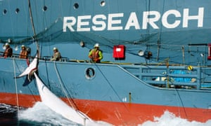 Japanese whaling fleet's harpoon vessel Yushin Maru No 2, with a minke whale in the Southern Ocean.
