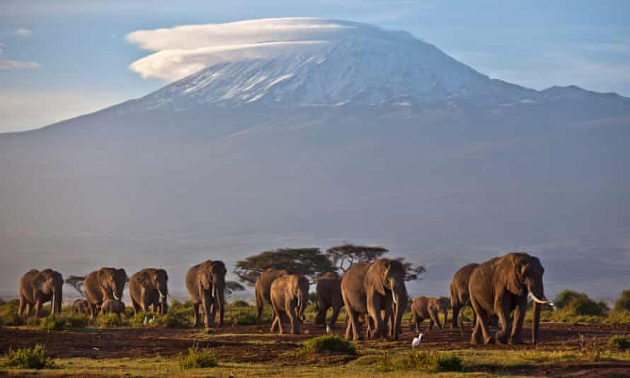 In this Monday, Dec. 17, 2012 file photo, a herd of adult and baby elephants walks in the dawn light as the highest mountain in Africa Mount Kilimanjaro in Tanzania is seen in the background, in Amboseli National Park, southern Kenya. The United Nations Environmental Program (UNEP) is marking the U.N.'s first ever World Wildlife Day Monday, March 3, 2014 to raise awareness about an illicit global trade in illegal timber, elephant ivory and rhino horns worth an estimated $19 billion.