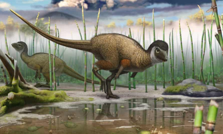 The discovery last year of Kulindadromeus, which had both scales and feathers, prompted speculation that this may have been the case for all dinosaurs.