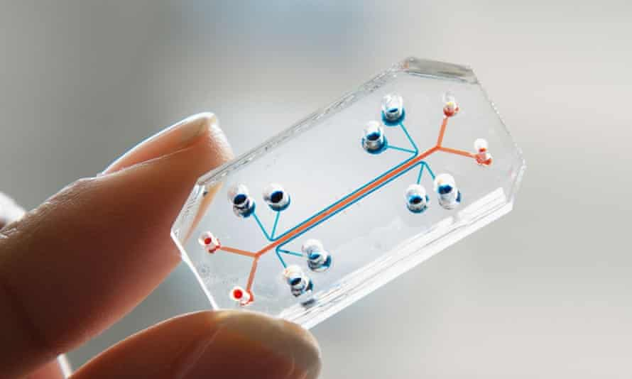 Lung-on-a-chip … A tiny channel lined with human lung and capillary cells allows the biological processes of breathing to be simulated.