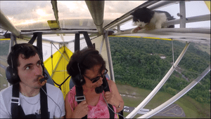 Pilot notices cat for first time