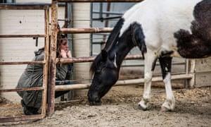 horse therapy sarah smith california