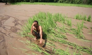 Indian farmer looks at damaged crops