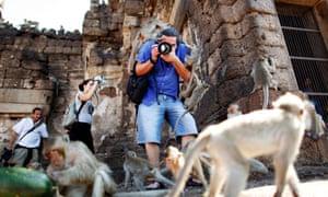 tourists photograph monkeys