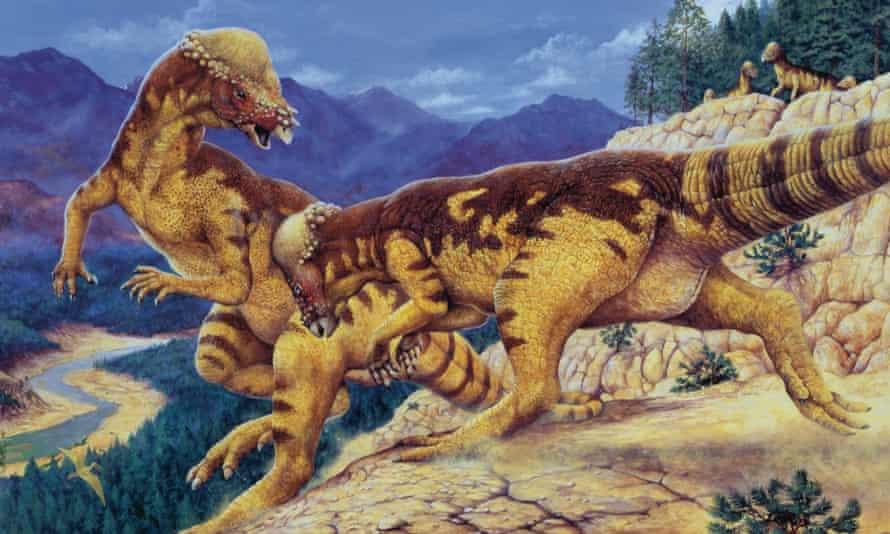 An illustration of pachycephalosauruses fighting.