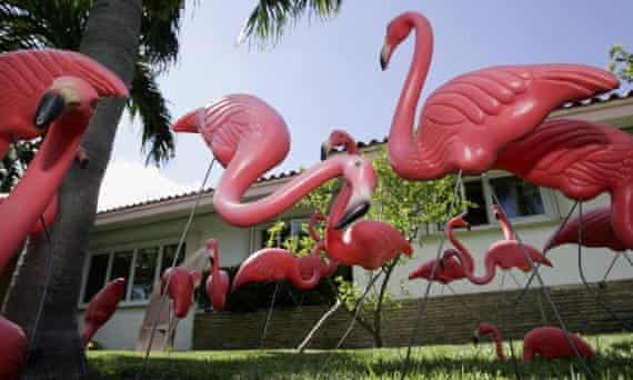 Plastic pink flamingos on a lawn in Key Biscayne, Florida.