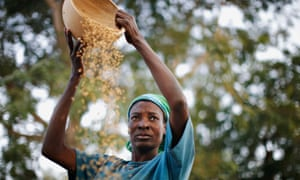 A woman winnows rice in the northern Ghanaian town of Bolgatanga.