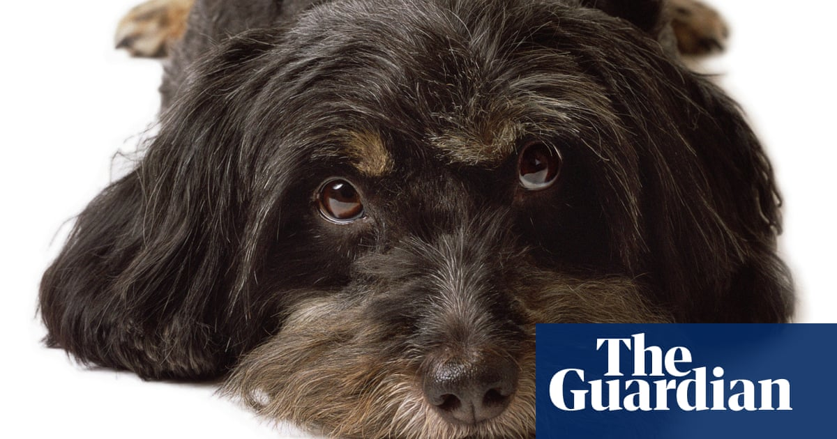 In The Dog House When Does Crating Your Canine Become Pet Abuse Dogs The Guardian