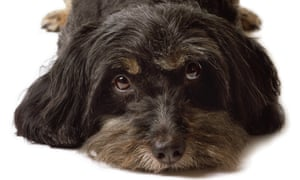 In the dog house: when does crating your canine become pet