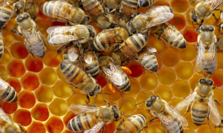 Honeybee colonies declined by 14.5% in England in the winter of 2014/15.