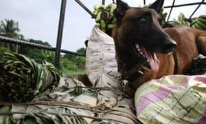 Sniffer dogs are the frontline troops in the battle against bushmeat.