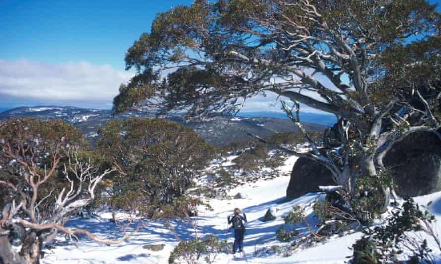 Skiing at Thredbo can be done on a budget.