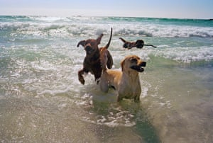 Dogs in the sea.
