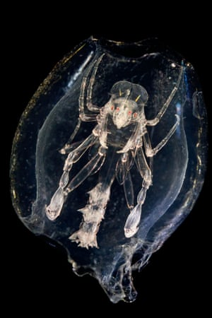 'Plankton are a huge range of sizes and very fragile.'