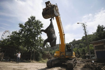 An excavator removes a dead bear at the zoo in Tbilisi on 17 June.The zoo lost nearly half its inhabitants to the flood.
