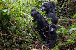 The Bageni family in the gorilla sector of Virunga National Park