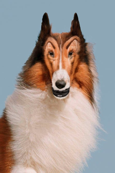 Reconstructed Lassie, 2012, by John Waters.