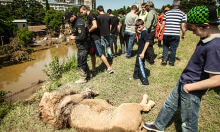 Media coverage of Tbilisi's flood focused on the zoo animals, despite the deaths of 19 people in the disaster.